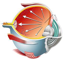 Glaucoma Treatment Center Wyomissing, PA